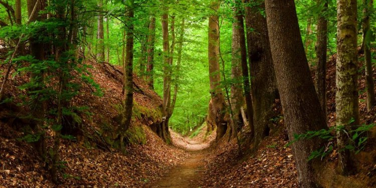 The Natchez Trace Walking
