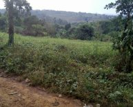2 Acres of Land for Sale